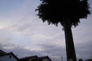 100526_01.jpg