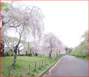 20110429_1.jpg